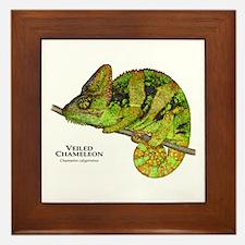 Veiled Chameleon Framed Tile