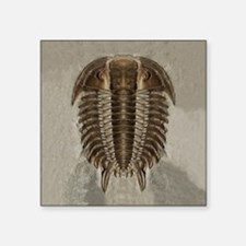 Trilobite Fossil Sticker