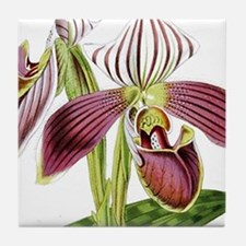 Lady Slipper Orchid Tile Coaster