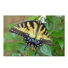 Swallowtail Butterfly Postcards