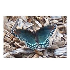 Astyanax Butterfly Postcards