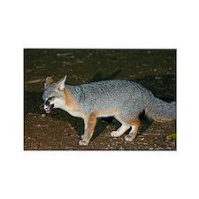 A Gray Fox feeding at night - Rectangle Magnet