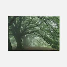 Ancient Beech woodland - Rectangle Magnet