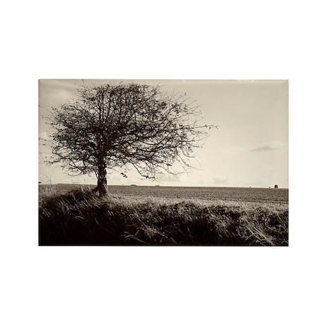 Bare tree - Rectangle Magnet