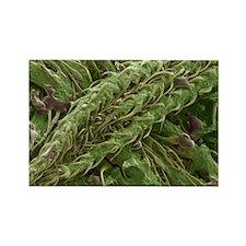 Cannabis plant, SEM - Rectangle Magnet