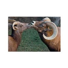 Desert Bighorn Sheep - Rectangle Magnet