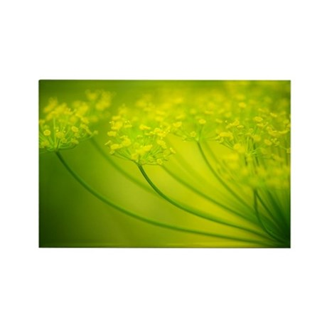 Dill (Anethum graveolens) - Rectangle Magnet