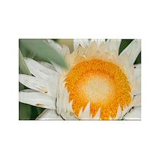 Everlasting flower - Rectangle Magnet