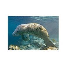 Florida manatee swimming - Rectangle Magnet