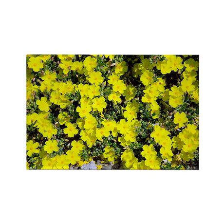 Halimium libanotis flowers - Rectangle Magnet