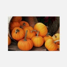 Harvested pumpkins - Rectangle Magnet
