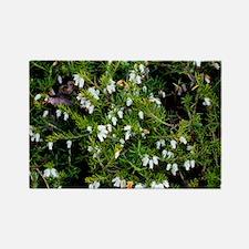 Heather 'Alba' flowers - Rectangle Magnet