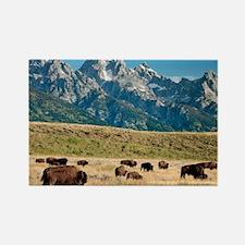 Herd of American Bison - Rectangle Magnet