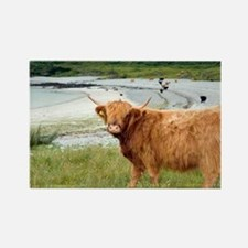 Highland cattle by the sea - Rectangle Magnet