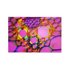 Maize stem, light micrograph - Rectangle Magnet
