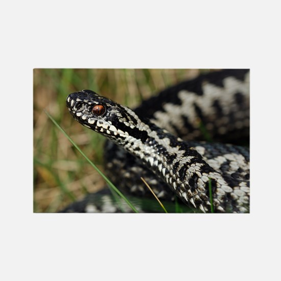 Male common European adder - Rectangle Magnet