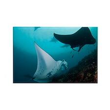 Manta rays - Rectangle Magnet