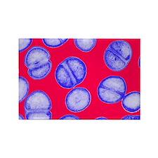 MRSA bacteria - Rectangle Magnet