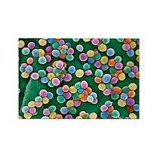MRSA bacteria, SEM - Rectangle Magnet