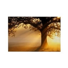 Oak tree at sunrise - Rectangle Magnet