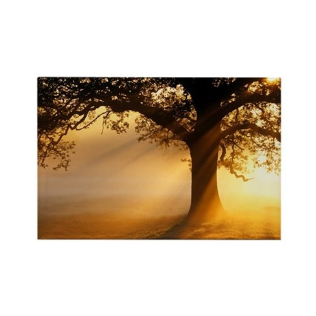 Oak tree at sunrise - Rectangle Magnet