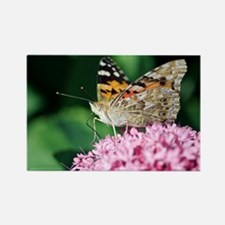 Painted Lady butterfly - Rectangle Magnet