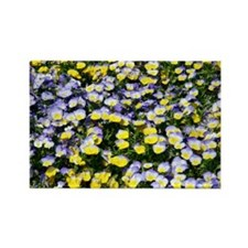 Pansies (Viola sp.) - Rectangle Magnet