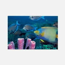 Queen angelfish and blue tangs - Rectangle Magnet