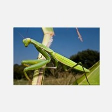 Praying mantis - Rectangle Magnet