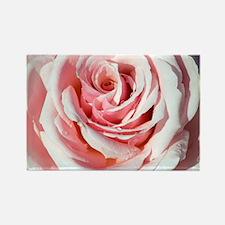 Rose (Rosa 'Savoy Hotel') - Rectangle Magnet