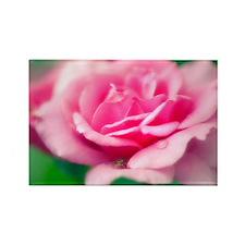 Rose (Rosa sp.) - Rectangle Magnet