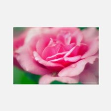 Rose (Rosa sp.) - Rectangle Magnet