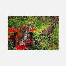 Reishi fungus - Rectangle Magnet
