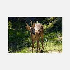 Roe Deer - Rectangle Magnet