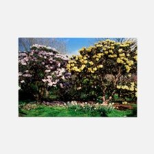 Rhododendron fortunei - Rectangle Magnet