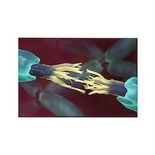 Severed nerve, artwork - Rectangle Magnet