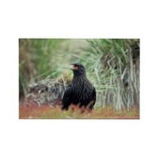 Striated caracara - Rectangle Magnet