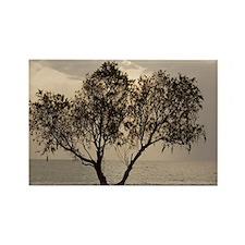 Tamarisk tree - Rectangle Magnet