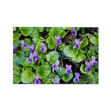 Viola odorata (Sweet Violets) - Rectangle Magnet