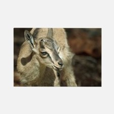 Young wild goat - Rectangle Magnet