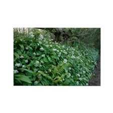 Wild garlic in woodland - Rectangle Magnet