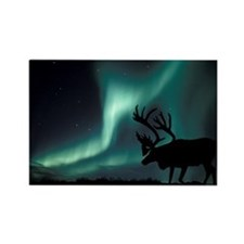 Aurora borealis and caribou - Rectangle Magnet