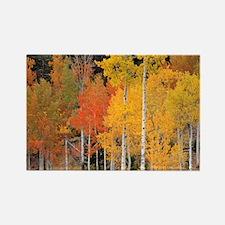 Autumn Aspen trees - Rectangle Magnet