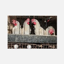 Battery hens in a coop - Rectangle Magnet