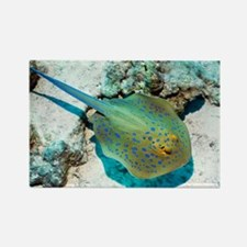 Bluespotted ribbontail ray - Rectangle Magnet