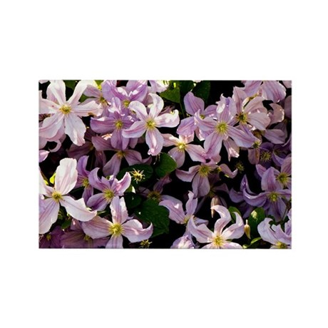 clematis 39 prince charles 39 rectangle magnet by sciencephotos. Black Bedroom Furniture Sets. Home Design Ideas