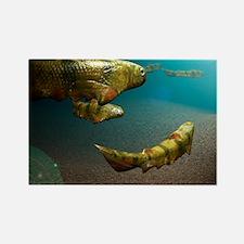 Climatius sp. prehistoric fish - Rectangle Magnet