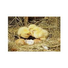 Chicks - Rectangle Magnet