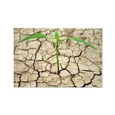 Cracked mud and seedling - Rectangle Magnet