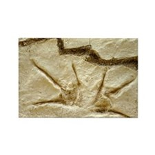Dinosaur footprint fossils - Rectangle Magnet
